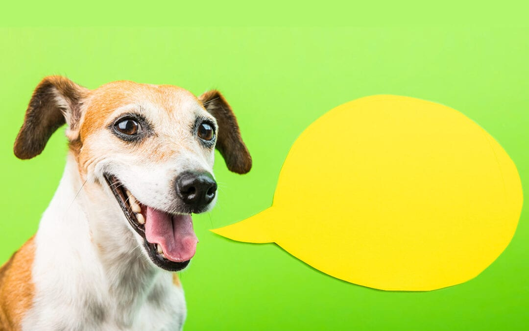 dog next to speech bubble